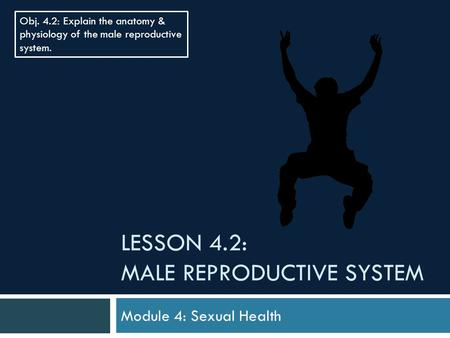 Male sexual anatomy physiology and overall sexual health