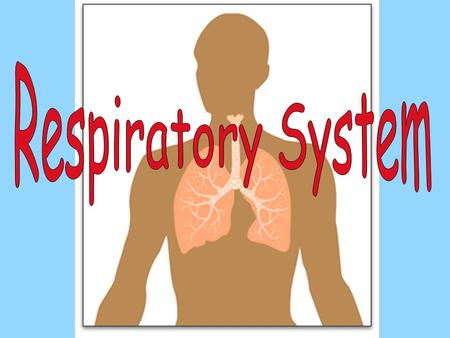 I.RESPIRATION is the process of exchanging gasses between the atmosphere and the body. II.Respiratory organs A. Nose and nasal cavity (the hollow space.