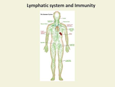 Lymphatic system and Immunity. Subclavian vein.