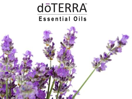 Essential Oils. Did You Know? Lavender is a calming oil, soothing mental stress in adults and children.