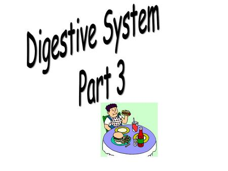 Digestive System Part 3.