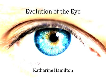 Evolution of the Eye Katharine Hamilton. The First Eye on Earth Trilobite, 543 million years ago.