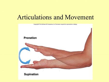 Articulations and Movement. Articulations or Joints Articulation or Joint –Place where two bones come together –Freely movable to limited to no apparent.