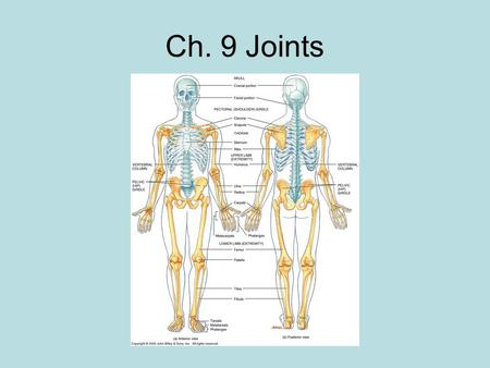 Ch. 9 Joints.