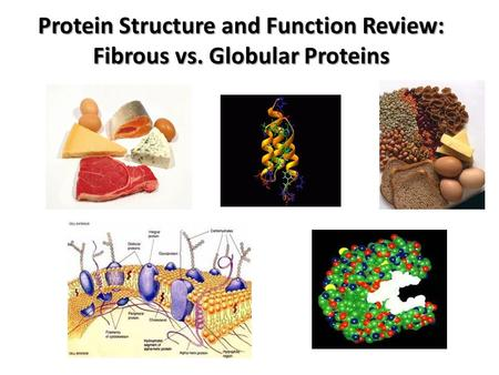 Protein Structure and Function Review: Fibrous vs. Globular Proteins.