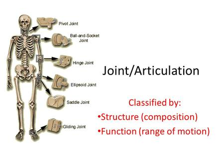 Classified by: Structure (composition) Function (range of motion)