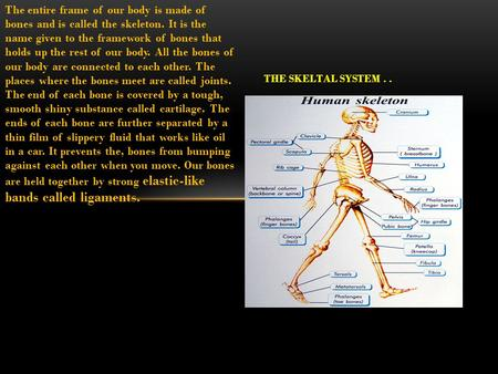 The entire frame of our body is made of bones and is called the skeleton. It is the name given to the framework of bones that holds up the rest of our.