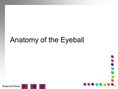 Anatomy of the Eyeball.