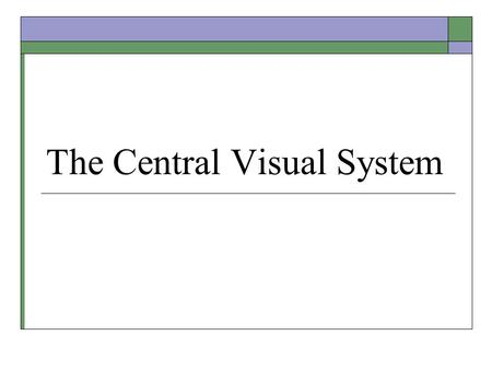 The Central Visual System