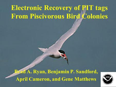 Electronic Recovery of PIT tags From Piscivorous Bird Colonies Brad A. Ryan, Benjamin P. Sandford, April Cameron, and Gene Matthews.
