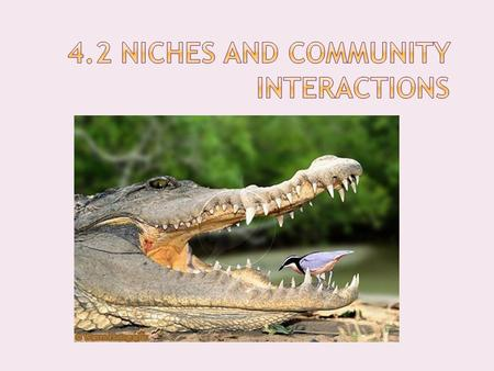 4.2 Niches and Community Interactions