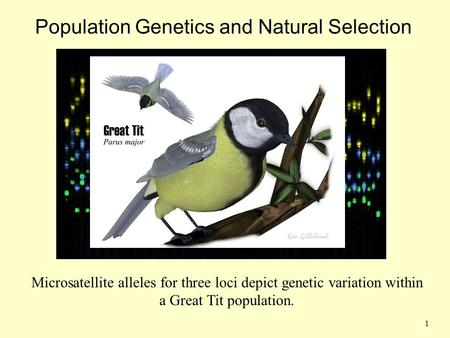 Population Genetics and Natural Selection