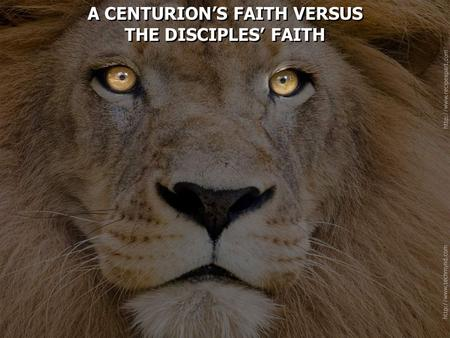 A CENTURION'S FAITH VERSUS THE DISCIPLES' FAITH A CENTURION'S FAITH VERSUS THE DISCIPLES' FAITH.
