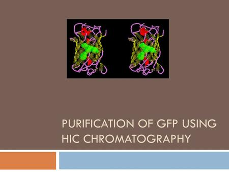 PURIFICATION OF GFP USING HIC CHROMATOGRAPHY. Chromatography  A technique used to separate molecules based on how they tend to cling to or dissolve in.