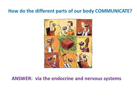 How do the different parts of our body COMMUNICATE?