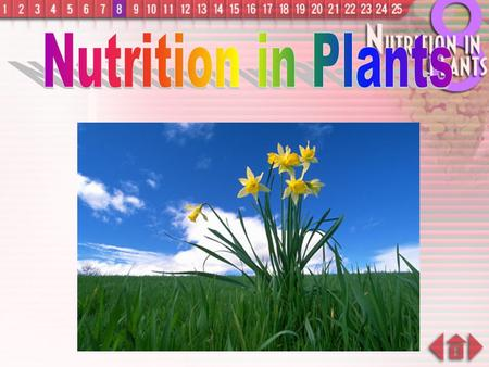 Nutrition in Plants.