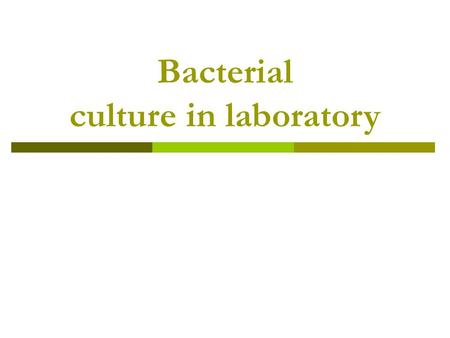 Bacterial culture in laboratory