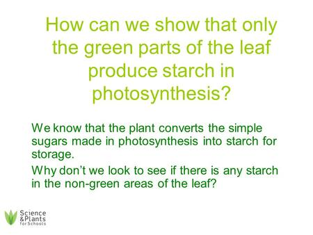 How can we show that only the green parts of the leaf produce starch in photosynthesis? We know that the plant converts the simple sugars made in photosynthesis.