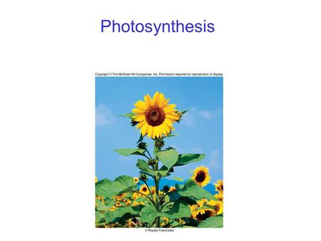 Photosynthesis. 2 Photosynthesis Overview Energy for all life on Earth ultimately comes from photosynthesis. 6CO 2 + 12H 2 O C 6 H 12 O 6 + 6H 2 O + 6O.