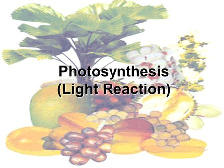 Photosynthesis (Light Reaction). Introduction to Photosynthesis Life is solar powered. photosynthesis captures light energy from the sun and converts.