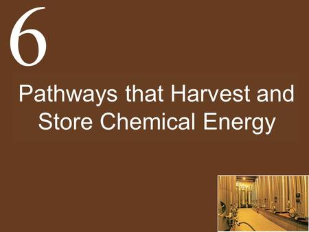 Pathways that Harvest and Store Chemical Energy