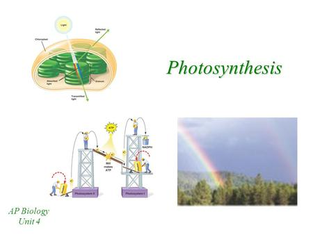 Photosynthesis AP Biology Unit 4.