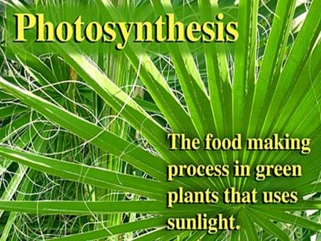 Plants and some other types of organisms are able to use light energy from the sun to convert H20 & CO2 into glucose. 2. Organisms such as plants, algae.