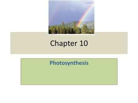 Chapter 10 Photosynthesis. The Process That Feeds the Biosphere Photosynthesis is the process that converts solar energy into chemical energy Directly.
