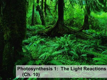 Photosynthesis 1: The Light Reactions (Ch. 10) Energy needs of life All life needs a constant input of energy – Heterotrophs (Animals) get their energy.