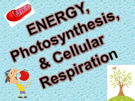 ENERGY, Photosynthesis, & Cellular Respiration