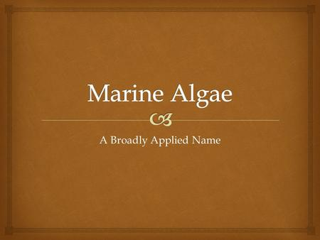 A Broadly Applied Name.   Algae are the ocean counterparts of plants, accounting for as much as 90% of the Earth's primary productivity and oxygen production.