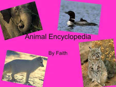 Animal Encyclopedia By Faith. Table of Contents Black footed ferret Caroline Wren Bengal Tiger African Wild Dog California sea lion Blue crab Flying snake.