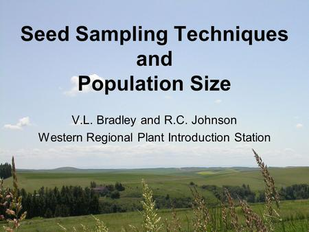 Seed Sampling Techniques and Population Size V.L. Bradley and R.C. Johnson Western Regional Plant Introduction Station.