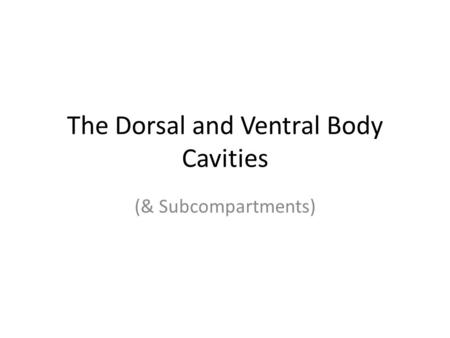 The Dorsal and Ventral Body Cavities