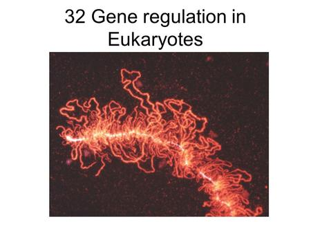 32 Gene regulation in Eukaryotes. Lecture Outline 11/28/05 Gene regulation in eukaryotes –Chromatin remodeling –More kinds of control elements Promoters,