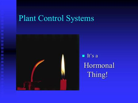 Plant Control Systems It's a Hormonal Thing!.