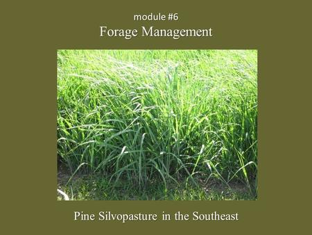 Module #6 Forage Management Pine Silvopasture in the Southeast.