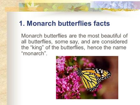 "1. Monarch butterflies facts Monarch butterflies are the most beautiful of all butterflies, some say, and are considered the ""king"" of the butterflies,"