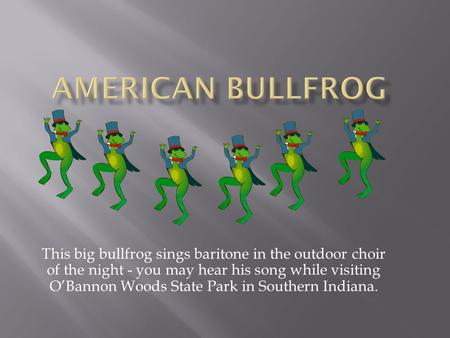 This big bullfrog sings baritone in the outdoor choir of the night - you may hear his song while visiting O'Bannon Woods State Park in Southern Indiana.