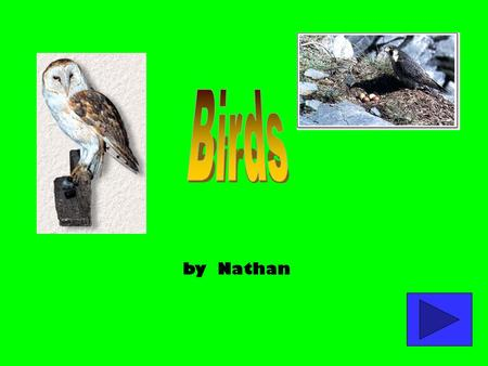 by Nathan 1. Birds Hatching How They Hatch Care of Young 2. Birds of Prey Weapons Body.