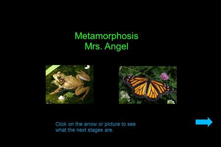 Metamorphosis Mrs. Angel Click on the arrow or picture to see what the next stages are.