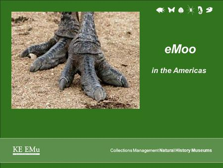 Collections Management Natural History Museums eMoo in the Americas.