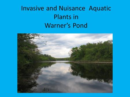 Invasive and Nuisance Aquatic Plants in Warner's Pond.