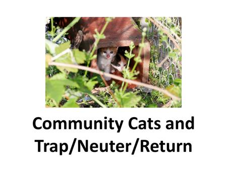 Community Cats and Trap/Neuter/Return. SPEAKER'S NAME CREDENTIALS ORGANIZATION AFFILIATION (If Applicable) CONTACT INFORMATION Phone E-mail INSERT A PICTURE.