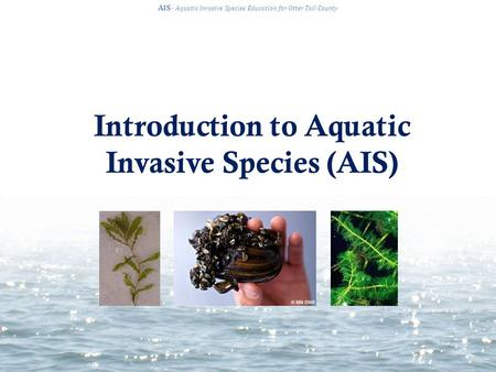 Introduction to Aquatic Invasive Species (AIS) AIS · Aquatic Invasive Species Education for Otter Tail County.