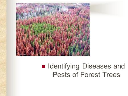 Identifying Diseases and Pests of Forest Trees. Next Generation Science / Common Core Standards Addressed! RST.11 ‐ 12.7 Integrate and evaluate multiple.
