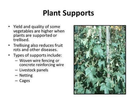Plant Supports Yield and quality of some vegetables are higher when plants are supported or trellised. Trellising also reduces fruit rots and other diseases.