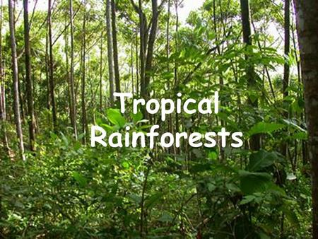 Tropical Rainforests.