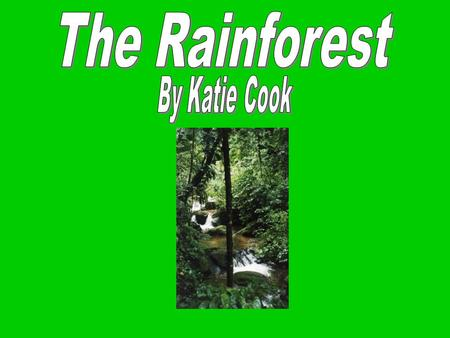The Rainforest By Katie Cook.