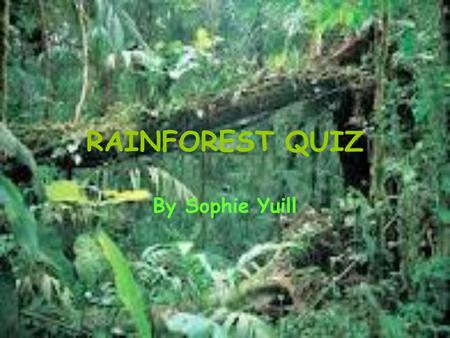 RAINFOREST QUIZ By Sophie Yuill. QUESTION 1… What percentage of the world is covered by Rainforests? A:3% B:20% C:6%